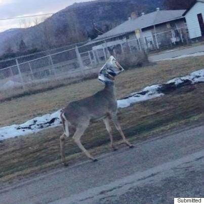 deer bag on head