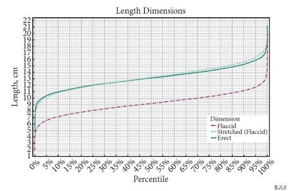 medir grosor pene