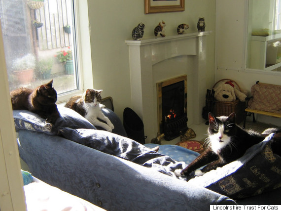 lincolnshire cat retirement home