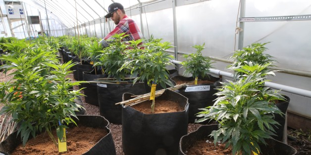 Sheriffs From 3 States Join Forces To Take Aim At Colorado's Marijuana Law