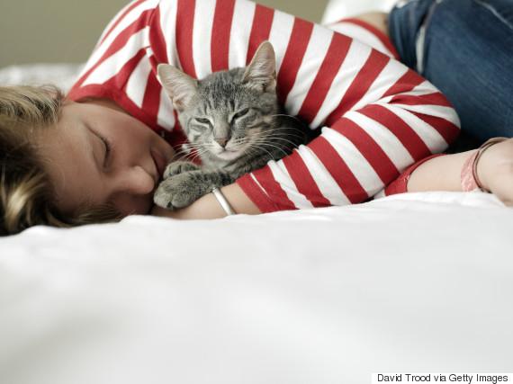 hug cat