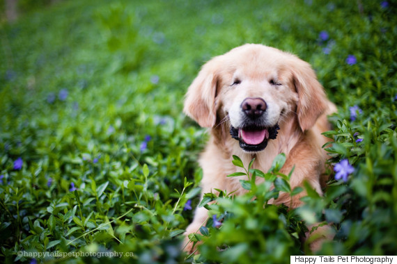 smiley blind retriever
