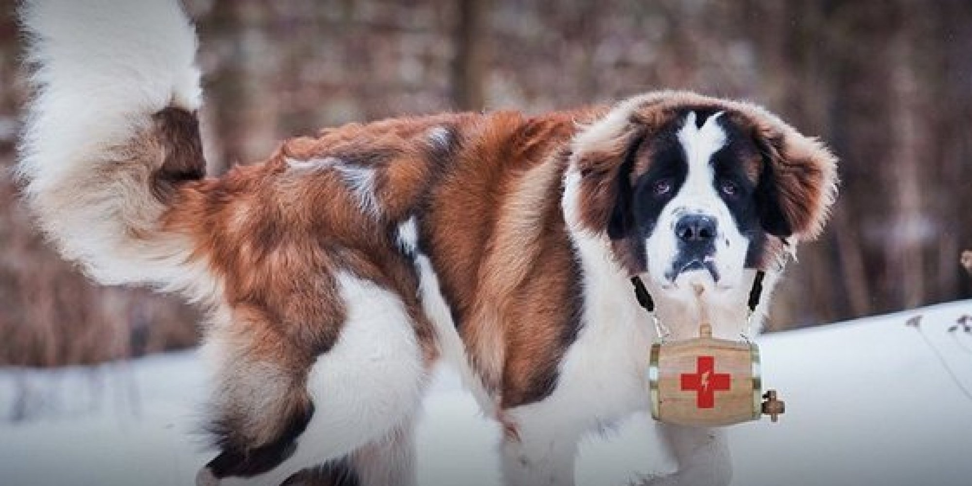 St Bernards To Be Dispatched At Sxsw To Rescue The Dying