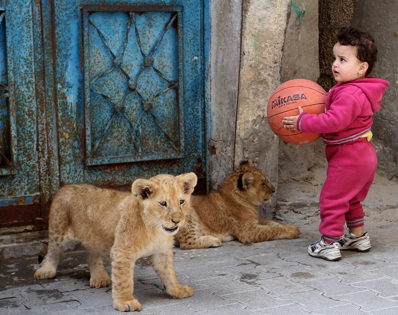lions palestine