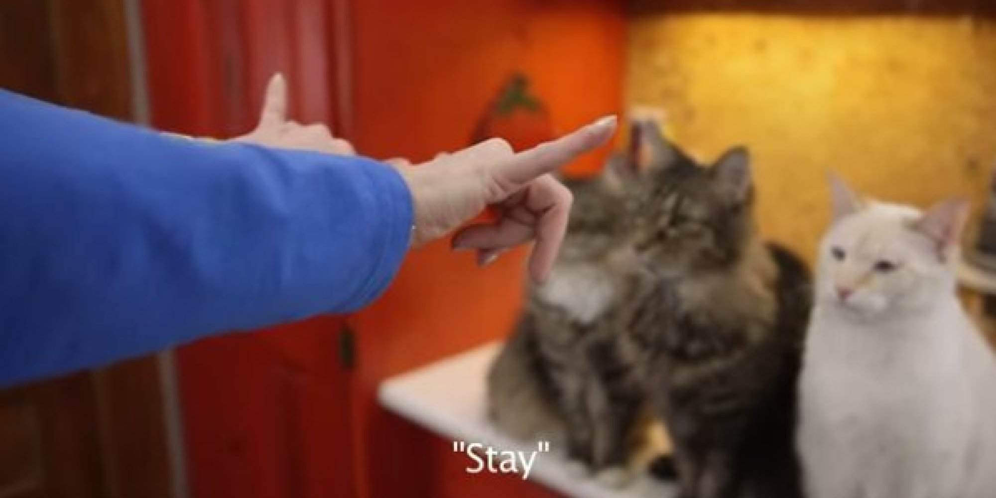 how to say cat in sign language