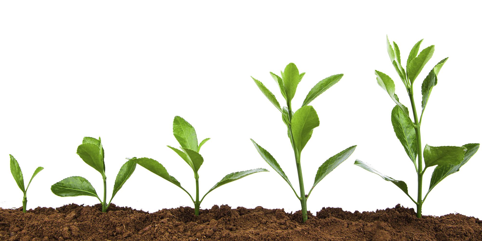 Plant - 731×347