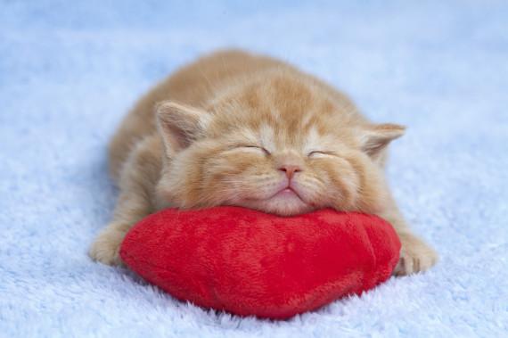 11 Razoes Pelas Quais Sua Obsessao Com Gatos Te Faz Mais Feliz E