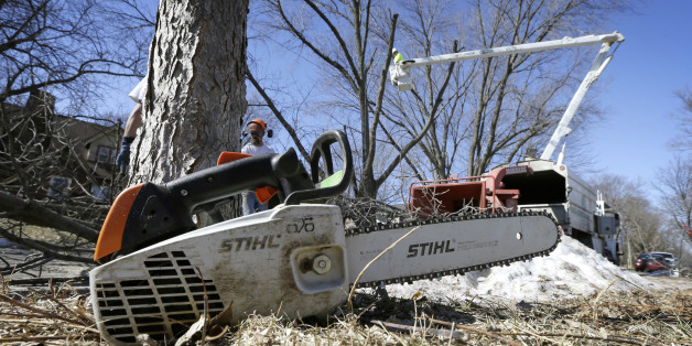 A chainsaw sits in a yard as a crew from Family Tree Care cuts down an ash tree, Monday, March 9, 2015, in Des Moines, Iowa. Daunted by the cost and difficulty of stopping the emerald ash borer, many cities are choosing to destroy their trees before the insect can. Chain saws are roaring in towns where up to 40 percent of the trees are ashes, and rows of stumps line streets once covered by a canopy of leaves. (AP Photo/Charlie Neibergall)