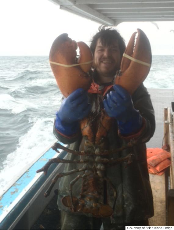 lobster jess tudor