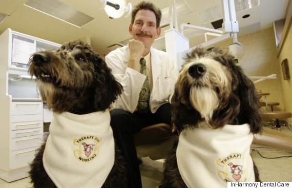 dentist dogs alex darrachcottick