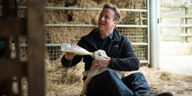 CHADLINGTON, ENGLAND - APRIL 5:   Prime Minister and leader of the Conservative Party David Cameron feeds orphaned lambs on Dean Lane farm near the village of Chadlington on April 5, 2015 in Chadlington, England. Britain goes to the polls for a general election on May 7. (Photo by Leon Neal - WPA Pool/Getty Images)