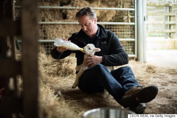 david cameron feeds orphaned lamb