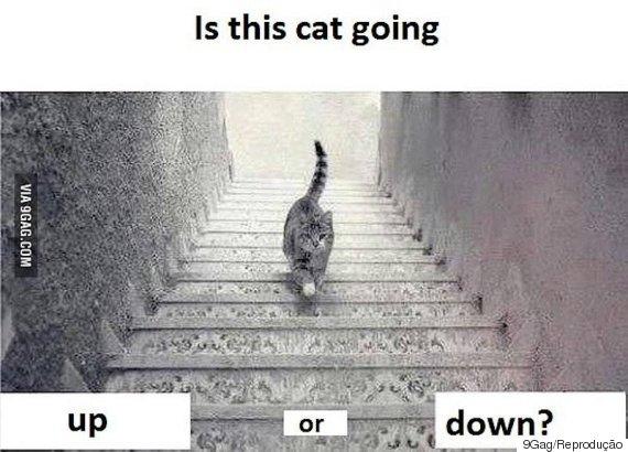 gato escada