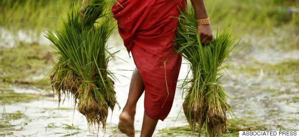 india farmer woman