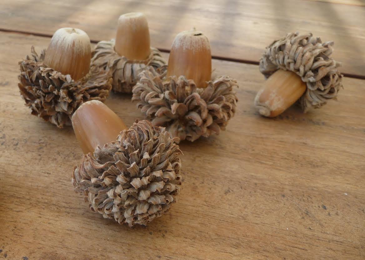 i love acorns