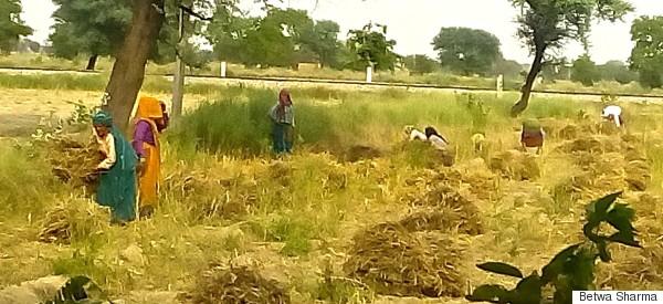 agra women farmers