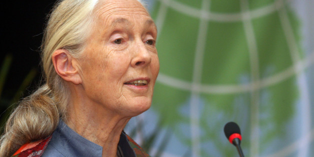 British primatologist, ethologist, anthropologist, and UN Messenger of Peace Jane Goodall speaks during the 'Avoided Deforestation' event, within the framework of the UN Conference on Sustainable Development, Rio+20, in Rio de Janeiro, Brazil, on June 21, 2012. World leaders attending the UN summit in Rio weighed steps to root out poverty and protect the environment as thousands of activists held several protests to denounce Amazon rainforest deforestation, the plight of indigenous peoples and the 'green economy' being advocated at the UN gathering.     AFP PHOTO / ZULMAIR ROCHA        (Photo credit should read ZULMAIR ROCHA/AFP/GettyImages)