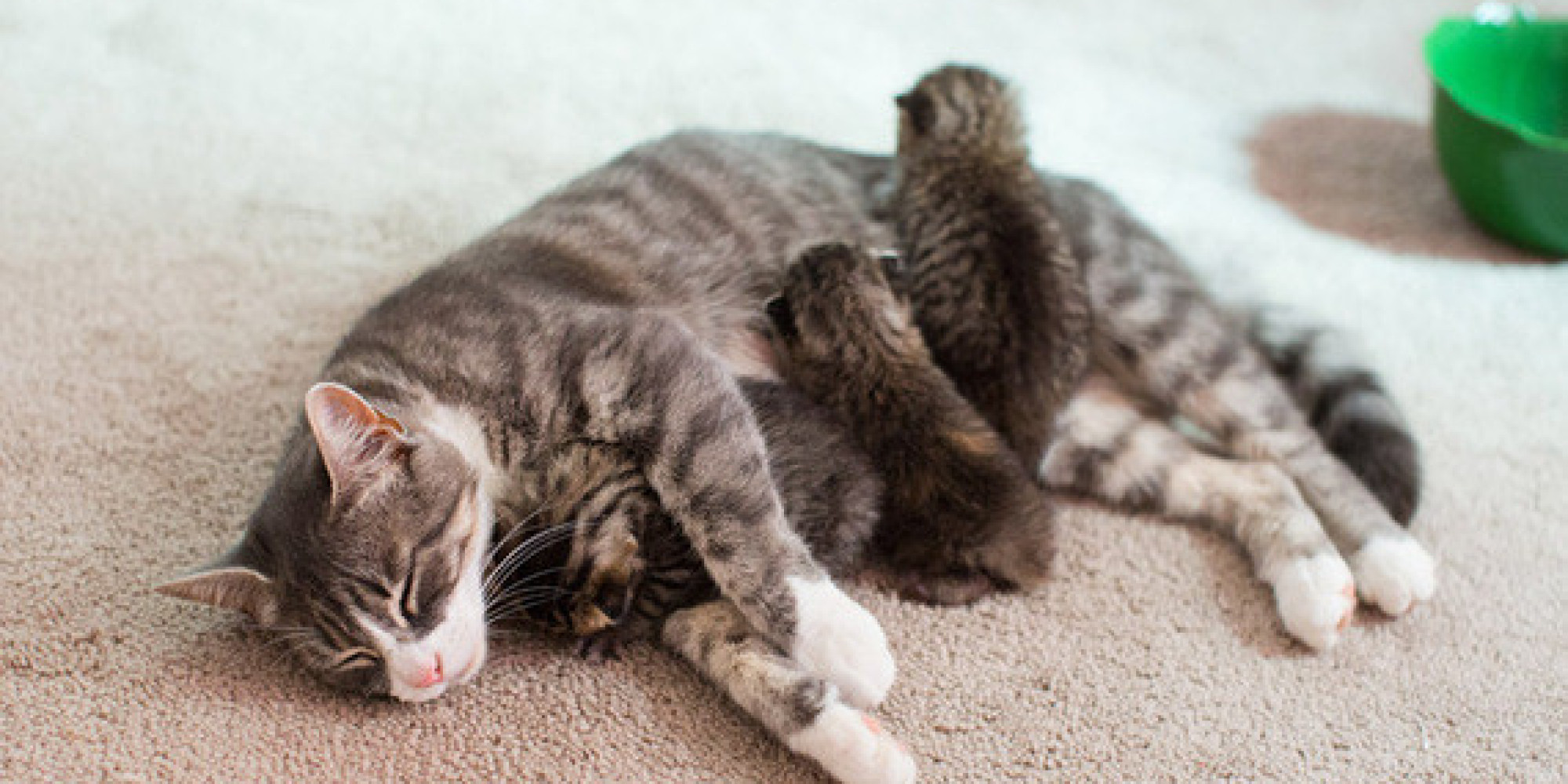grieving mama cat who lost all three babies matched with three