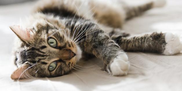 Warum Katzen uns heilen können