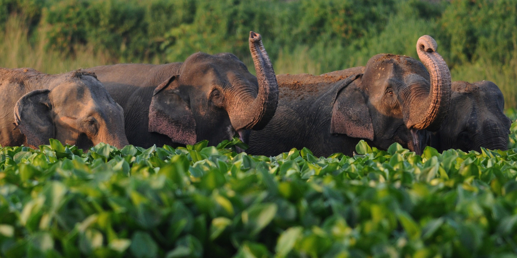 60 Percent Of Large Herbivores May Go Extinct Thanks To ...