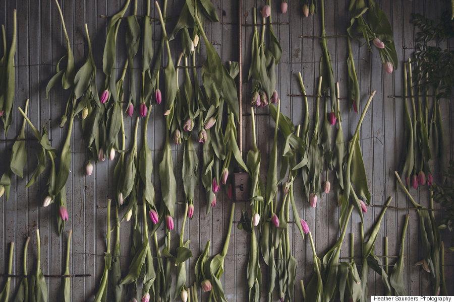 tulips hangng