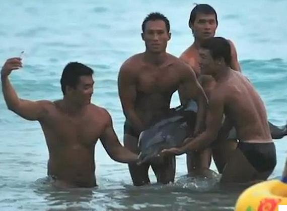 dolphin abuse