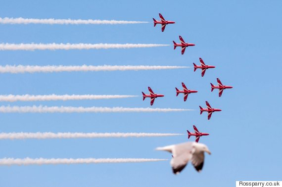 red arrows seagull