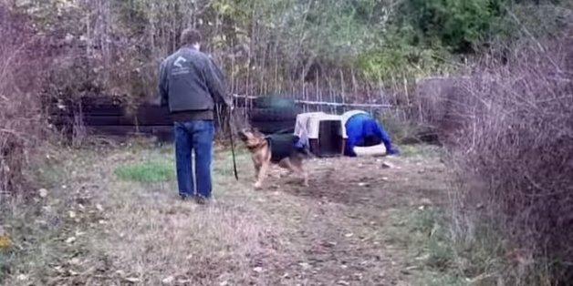 Als Er Diesen Bissigen Und Aggressiven Hund Von Der Leine Lässt, Passiert  Etwas Erstaunliches