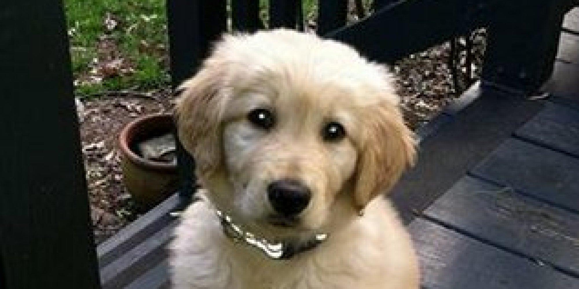 Petco Grooming Dog Dies