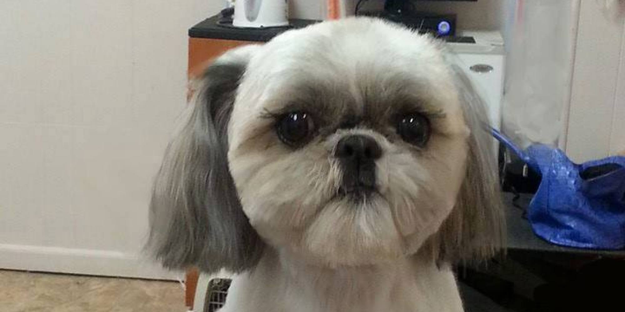 That Crazy Square Haircut For Dogs Is Available In America Too