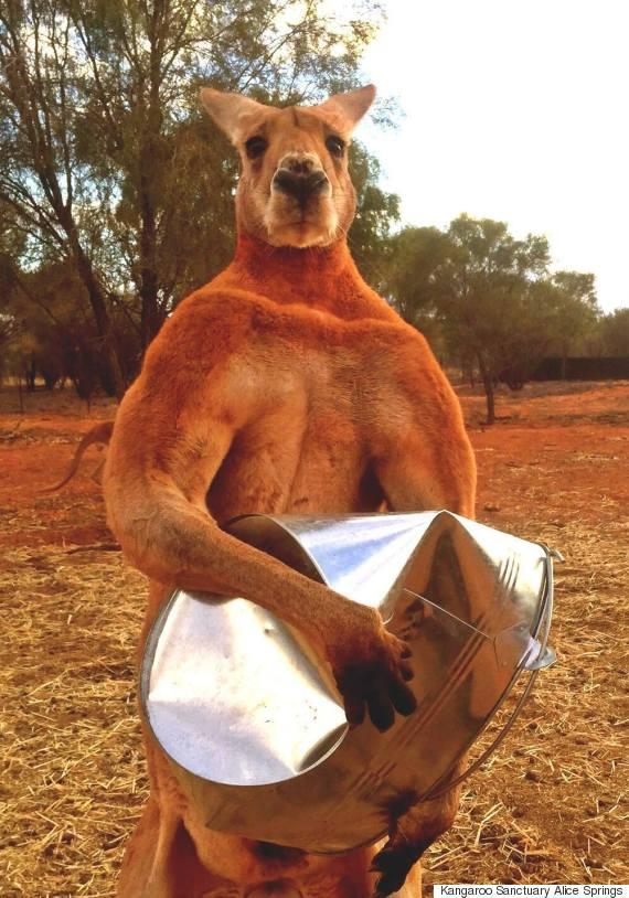 roger kangabro