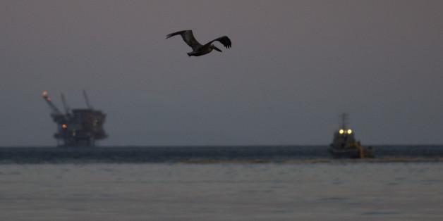 GOLETA, CALIFORNIA - MAY 19:  A California brown pelican flies over an oil slick in the ocean off Refugio State Beach as an oil platform (L) and a boat deploying a boom to contain the oil are seen in the distance on May 19, 2015 north of Goleta, California. About 21,000 gallons spilled from an abandoned pipeline on the land near Refugio State Beach, spreading over about four miles of beach within hours. The largest oil spill ever in U.S. waters at the time occurred in the same section of the coast where numerous offshore oil platforms can be seen, giving birth to the modern American environmental movement.  (Photo by David McNew/Getty Images)
