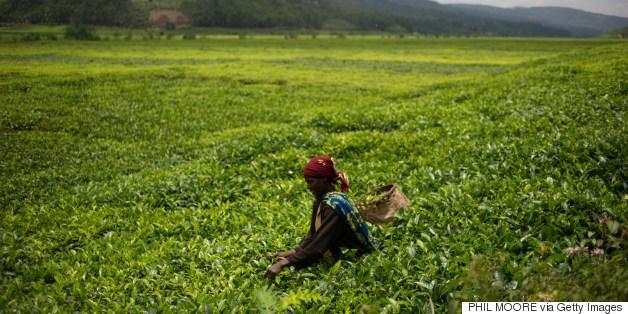 rwanda agriculture