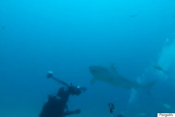 tiger shark attacks gopro