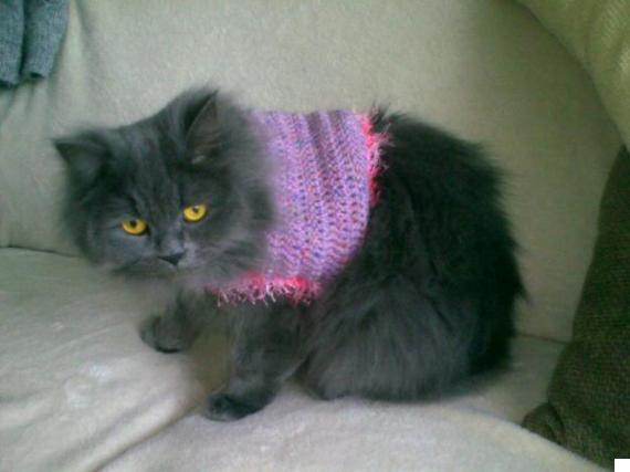cat in jumper