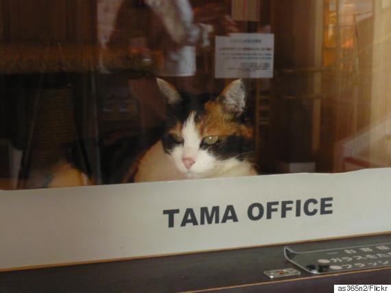 station cat tama
