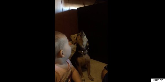 baby and dog singing