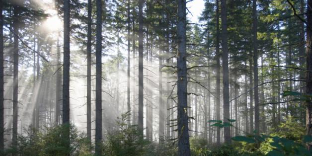 Möblierte Zukunft. Warum Holz und Handwerk heute immer wichtiger werden