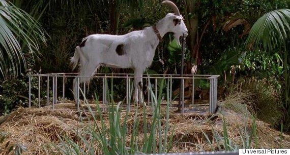 goat jurassic park
