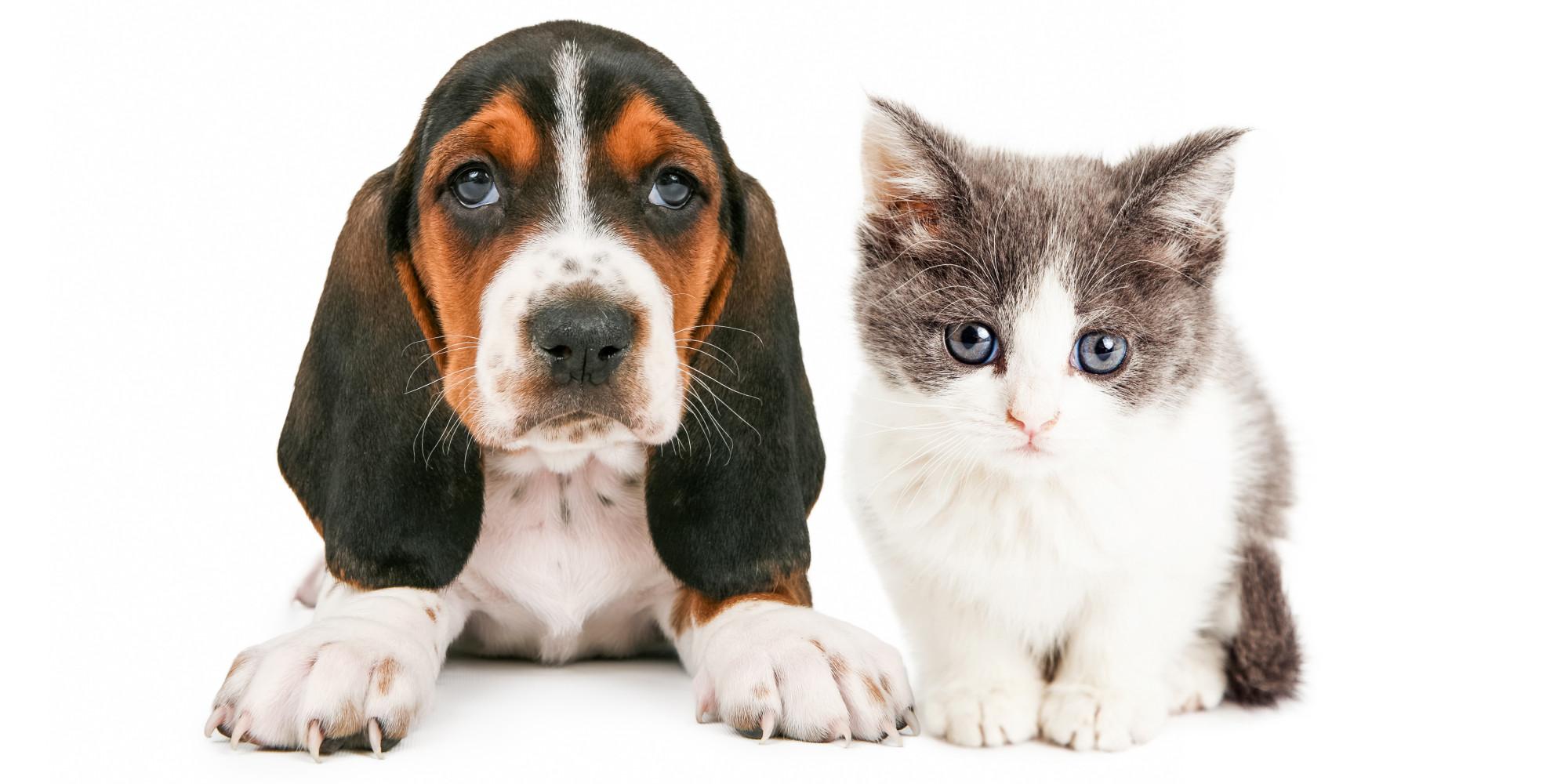 How Bad Pets Make Good Kids