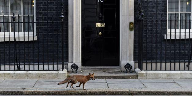 A fox makes its way past 10 Downing Street, London