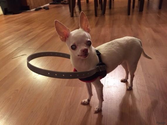 chien aveugle