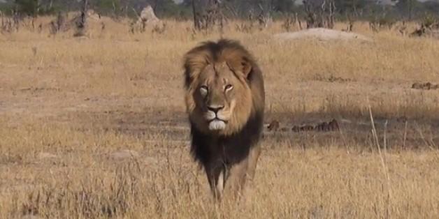 Le Zimbabwe restreint la grande chasse après la mort du lion Cecil