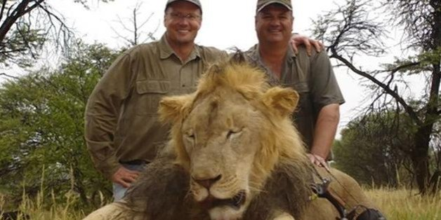 Cecil the lion, pictured dead with his killer Walter Palmer (left)