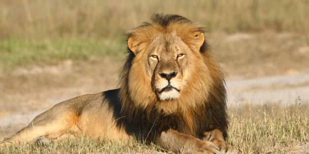 Löwe Cecil: NUn haben Wilderer auch seinen Bruder erschossen