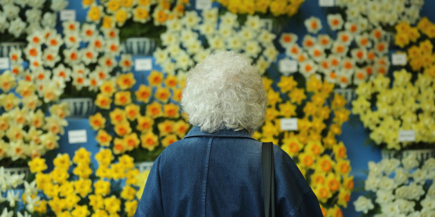 HARROGATE, ENGLAND - APRIL 25:  A woman views a display of daffodils on show at the Harrogate Spring Flower Show on April 25, 2013 in Harrogate, England. Over 100 nurseries are staging displays of their flowers and plants at the Harrogate Spring Show organised by the north of England Horticultural Society. The premier gardening event of the north attracts thousands of horticulturalists to view it's show gardens and Spring floral displays.  (Photo by Christopher Furlong/Getty Images)