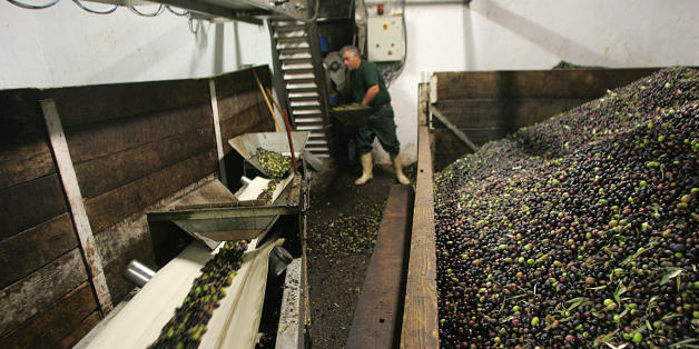 TO GO WITH AFP STORY IN FRENCH BY ISABELLE WESSELINGH : 'DELAISSEE PENDANT PLUS D'UN SIECLE, L'HUILE D'OLIVE A PRIS SA REVANCHE' : A worker of an oil mill loads the crusher with olives in Maussane-les-Alpilles, 13 November 2007. In order to extract the oil from the mesocarp, or flesh cells, of the olive fruit, the extraction process focuses on the separation of the oil and supplementary liquids from the solid material. The first step is washing, then comes the crushing with either stone mills or