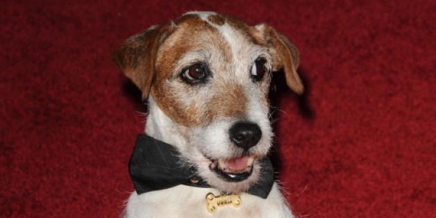 Filmhund Uggie ist gestorben