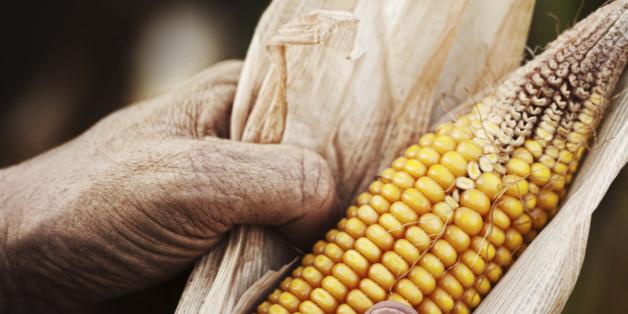 Die schreckliche Wahrheit über genmanipuliertes Essen