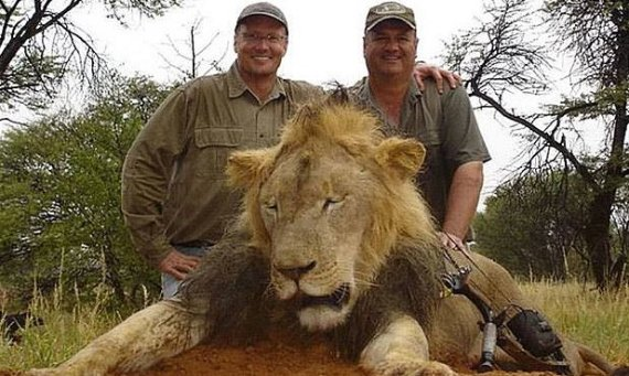 cecil the lion walter palmer
